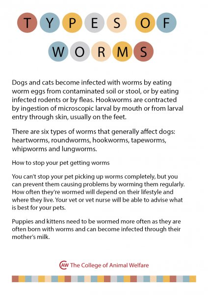 Types-of-Worms
