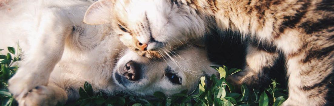dog and cat together - animal care apprenticeships blog