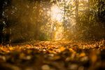 leaves in the forest - autumn pet safety tips blog