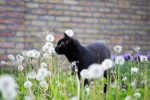 black cat in the garden - black cat appreciation day blog