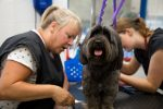 students grooming dog - level 3 diploma in dog grooming blog