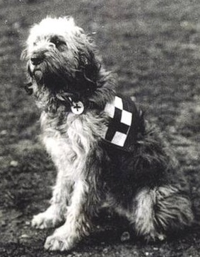 _76675246_10013673_mary_evans_casualty_dog