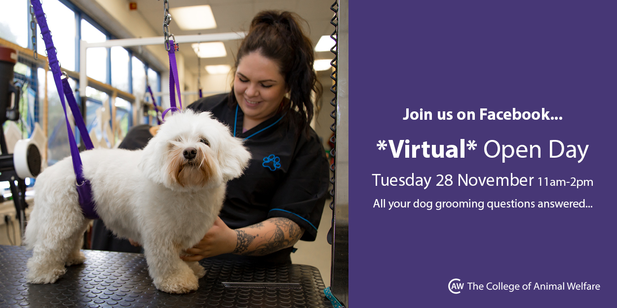Dog Grooming Facebook Open Day Ad 201711132