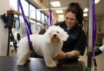 student dog groomer with dog - level 3 diploma dog grooming blog