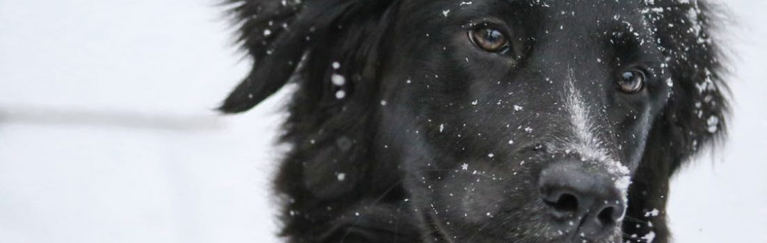 dog in the snow - winter pet safety tips blog