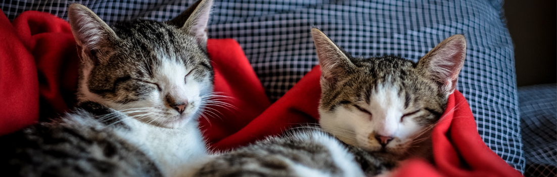 cats sleeping for blog