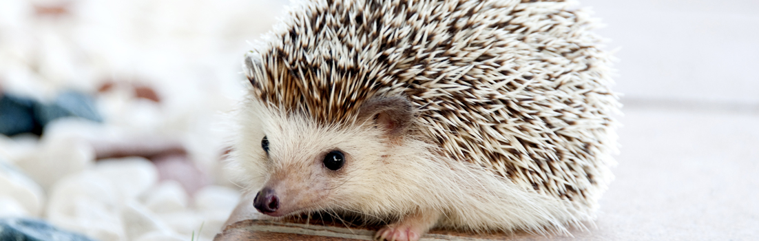 hedgehog blog