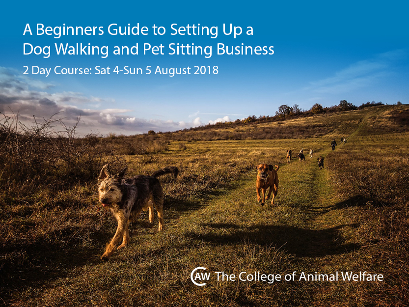 dog walking and pet sitting business short course