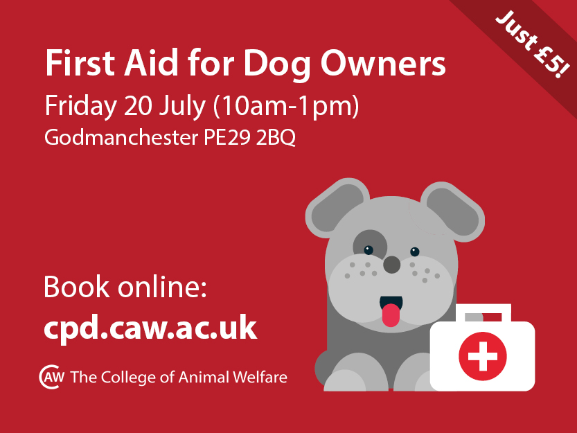dog first aid course promotional poster