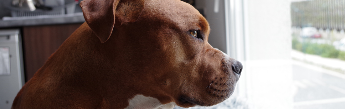 helping separation anxiety in dogs