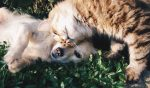 dog and cat - animal care traineeship featured image