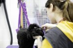 fast track dog grooming courses