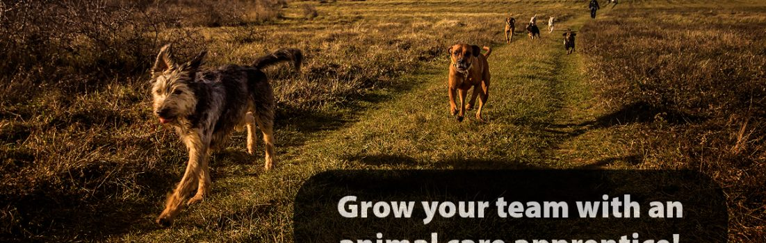 Animal care apprentice blog cover image