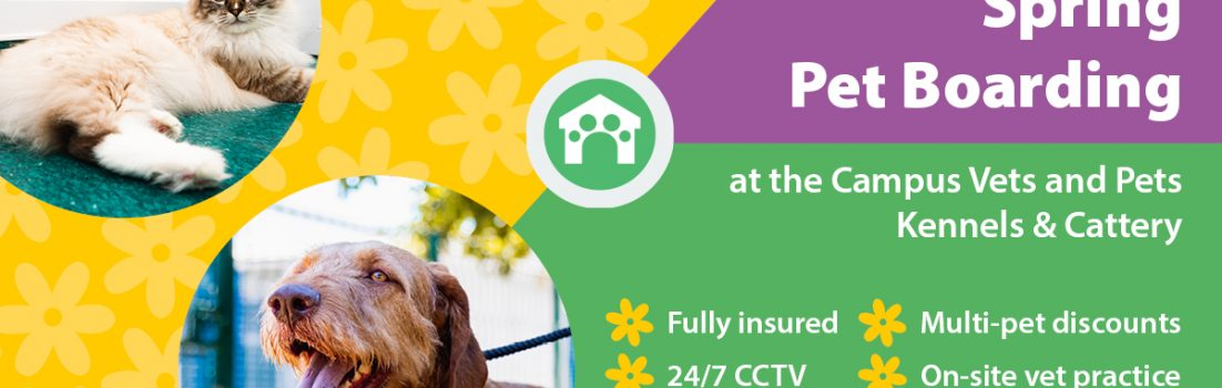 Blog cover image - campus vets and pets pet boarding spring 2019