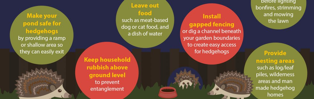 Hedgehog Awareness Week Infographic Full Size