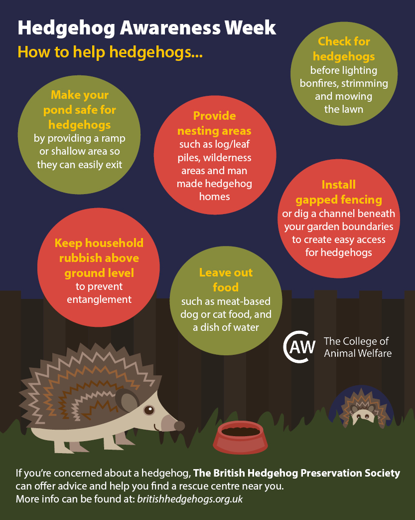 Hedgehog awareness week infographic - how to help hedgehogs3