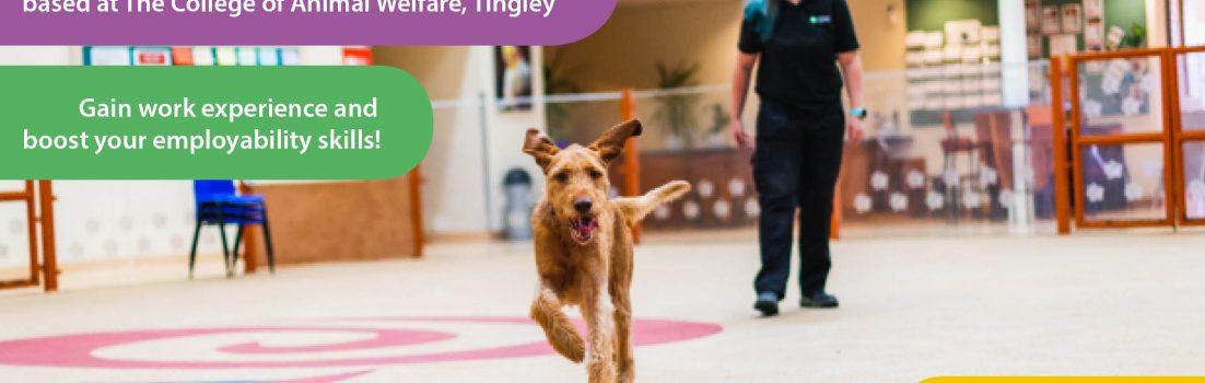 animal care traineeship advertisement