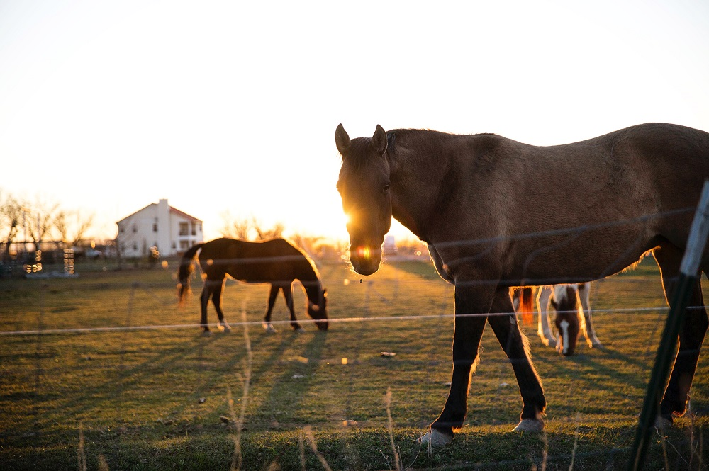 Equine Careers for Horse Lovers