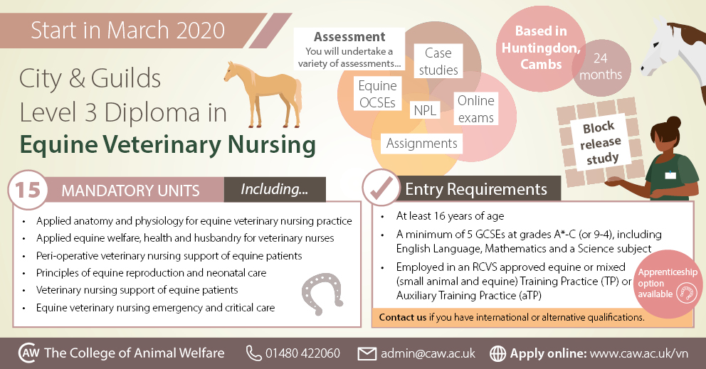 Equine Veterinary Nursing Course Infographic