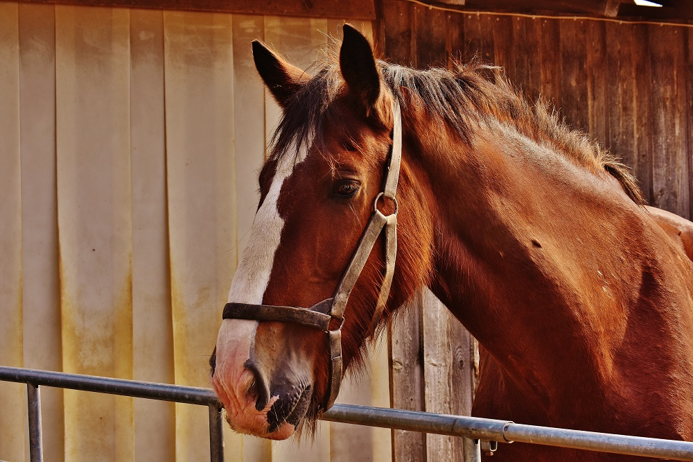 Horse Groom Job Profile