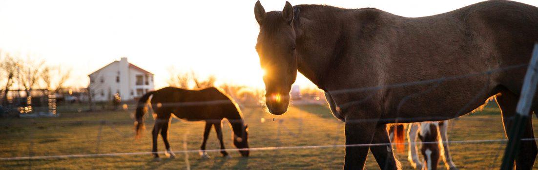Equine Apprenticeships